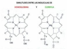 Moleculas de Hemoglobina y Clorofila